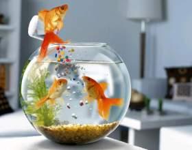 Чим годувати рибок? фото