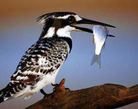 Чим харчуються птахи? фото