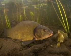 Чим харчуються риби? фото