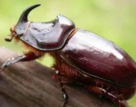 Чим харчуються жуки? фото