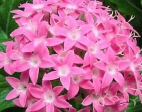 Чим корисні квіти? фото