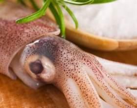Чим корисні кальмари? фото