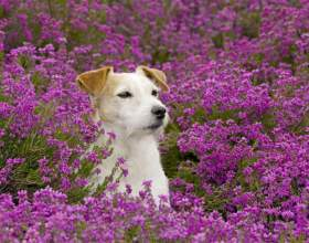 Чим рослини відрізняються від тварин? фото