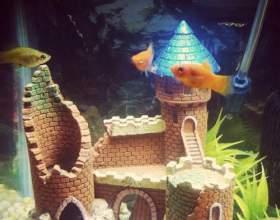 Що потрібно для акваріума? фото