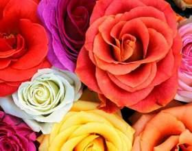 Що означає колір квітів? фото