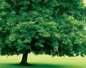 Що таке дерево? фото