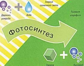 Що таке фотосинтез? фото