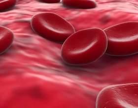 Що таке кров? фото