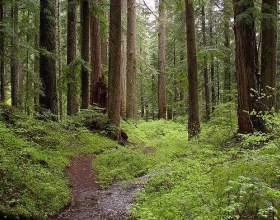 Що таке ліс? фото
