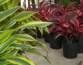 Для чого потрібні рослини? фото