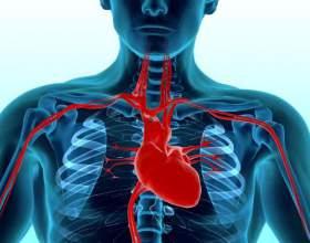Де знаходиться серце? фото