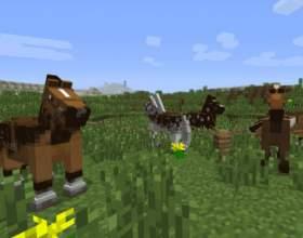 Де знайти коня? фото