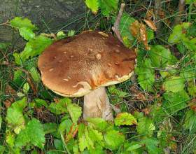 Де ростуть гриби? фото