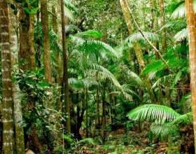 Де ростуть тропічні ліси? фото