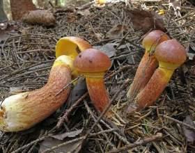 До чого відносяться гриби? фото