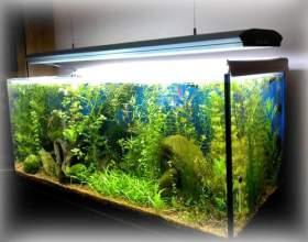 До чого сниться акваріум? фото