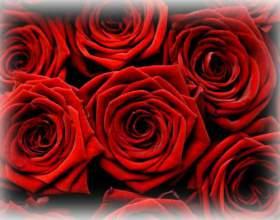 До чого сняться троянди? фото