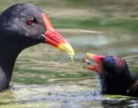 Як би птах назвала пташеня? фото