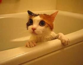 Як часто мити кішку? фото