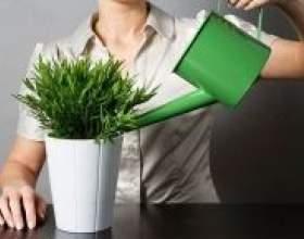 Як часто потрібно поливати кімнатні квіти фото