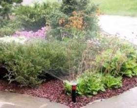Як часто поливати рослини фото