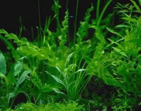 Як дихають рослини? фото