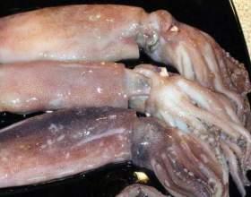 Як є кальмарів? фото