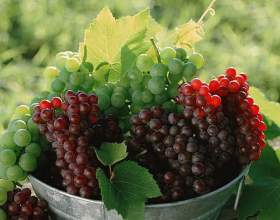 Як зберігати виноград? фото