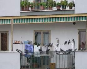 Як позбутися від голубів? фото