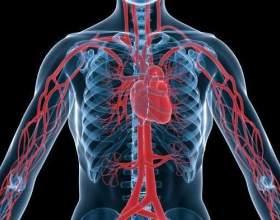 Як лікувати серце? фото