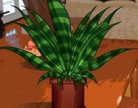 Як намалювати рослина? фото
