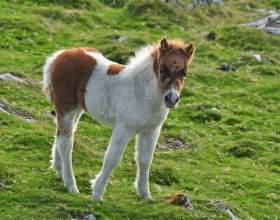Як назвати коня? фото