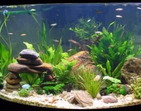 Як оформити акваріум? фото
