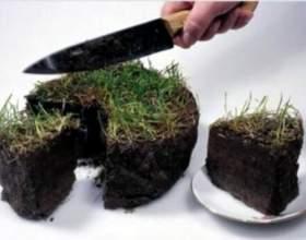 Як оформити землю в оренду? фото