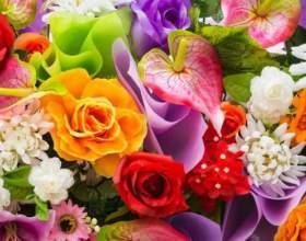 Як визначити квітка або квіти? фото