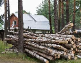 Як отримати ліс для будівництва? фото