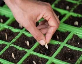 Як посадити насіння? фото