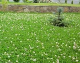 Як посадити траву? фото