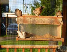 Як побудувати голубник? фото