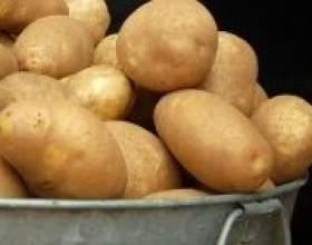 """Як правильно зібрати урожай картоплі С""""РѕС'Рѕ"""