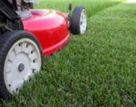 Як правильно стригти газон фото
