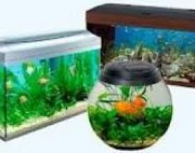 Як правильно вибрати акваріум фото