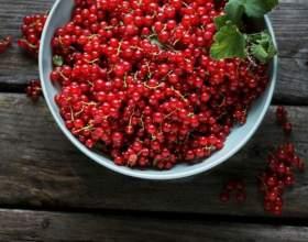 Як приготувати червону смородину? фото