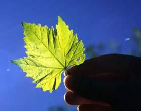 Як відбувається фотосинтез? фото