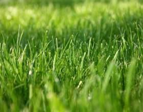 Як росте трава? фото