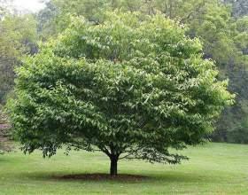 Як ростуть дерева? фото