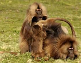 Як розмножуються тварини? фото