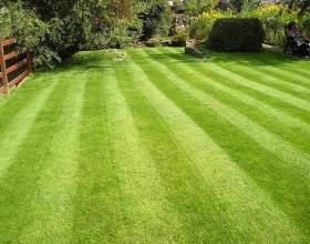 Як садити траву? фото