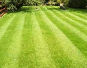 Як зробити газон? фото