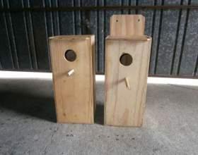 Як зробити гніздо папузі? фото